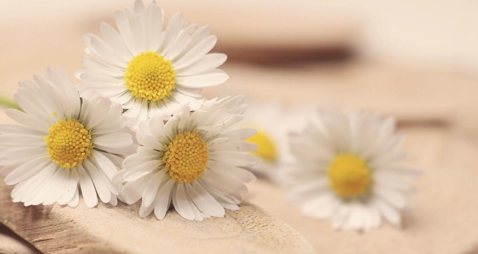 Chamomile does feature in one of the world's biggest brands - Hendrick's.