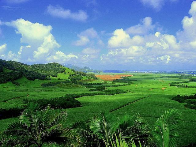 Sugarcane plantation in Mauritius - Photo: Asadbabil / Wikimedia Commons