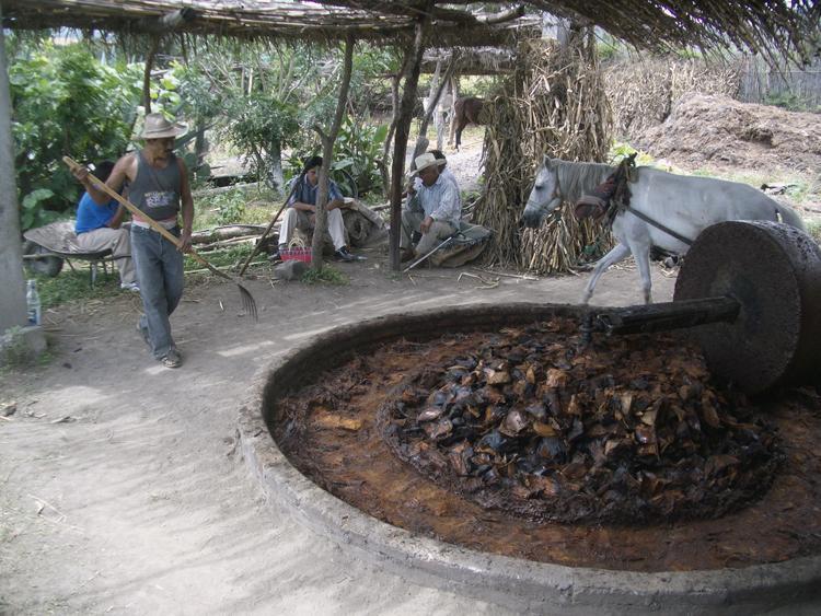 Agave crushing - PHOTO: FLICKR/ Wikimedia Commons