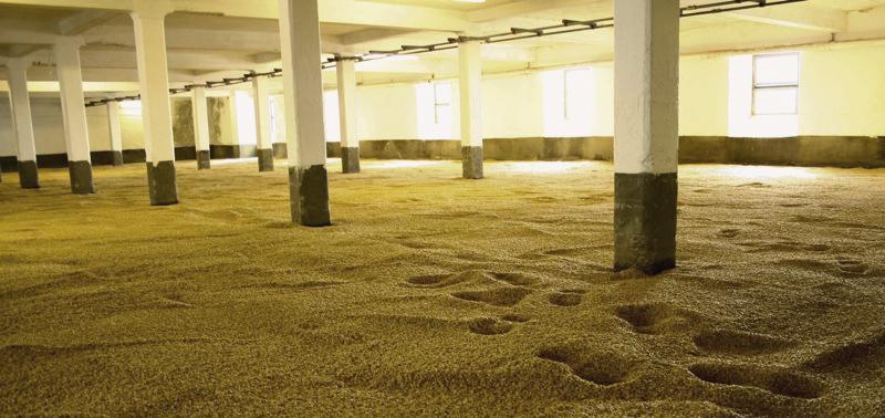 Malting Barley - PHOTO: Flickr/Paul Joseph