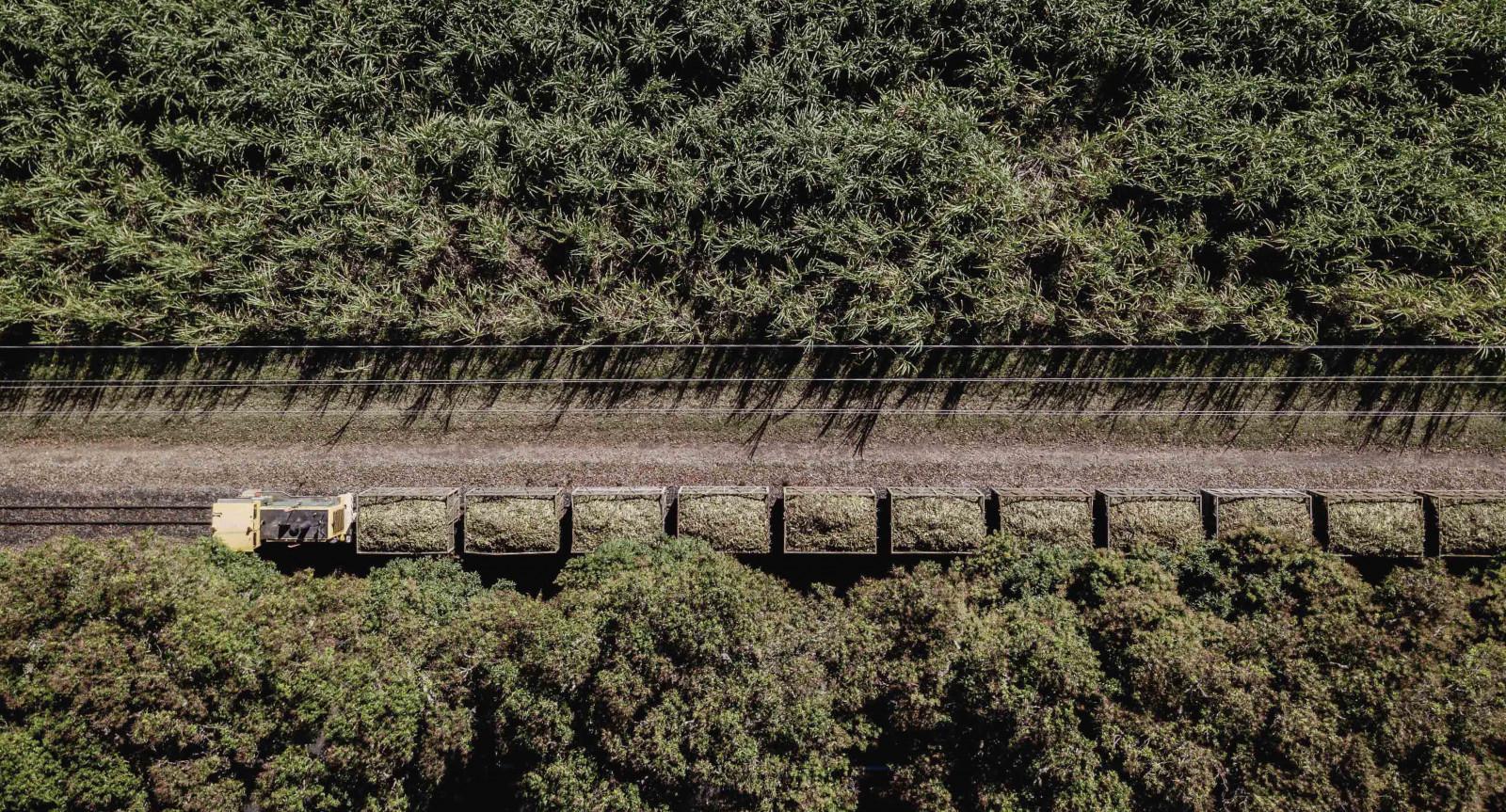 Sugar Cane Fields