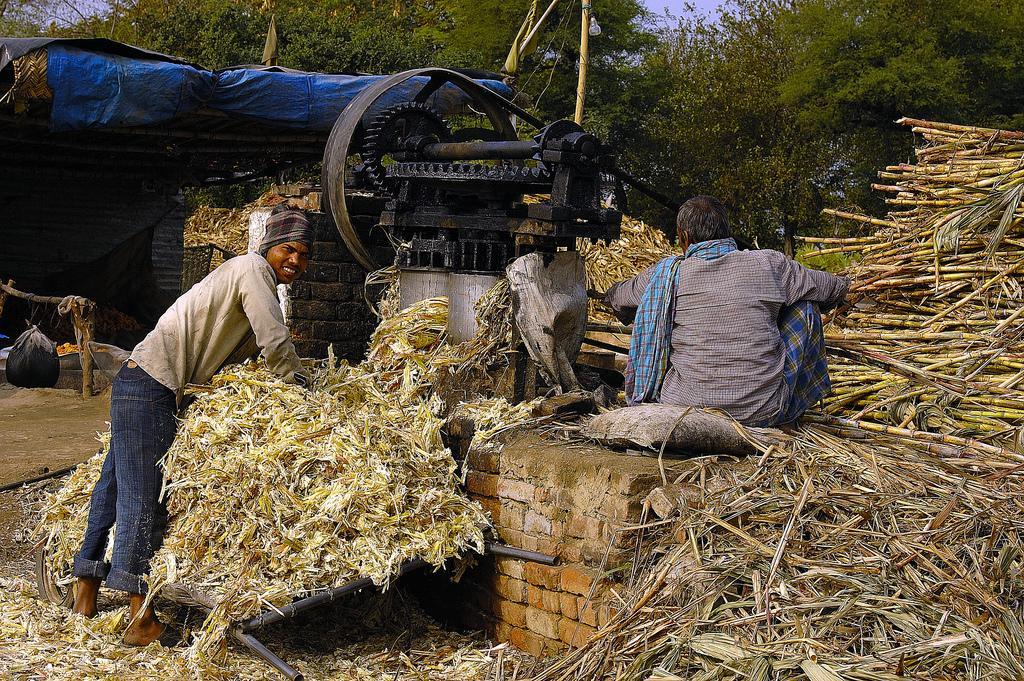 Sugar Cane Processing / Photo: Flickr - appaji