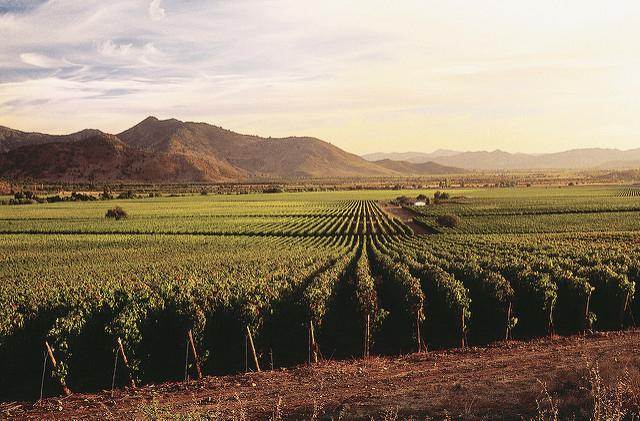Vineyards in Chile - Photo: Flickr/caliterra
