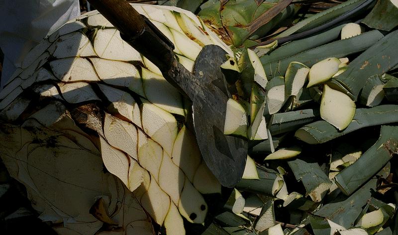Coa tool / Photo: Flickr - mickou