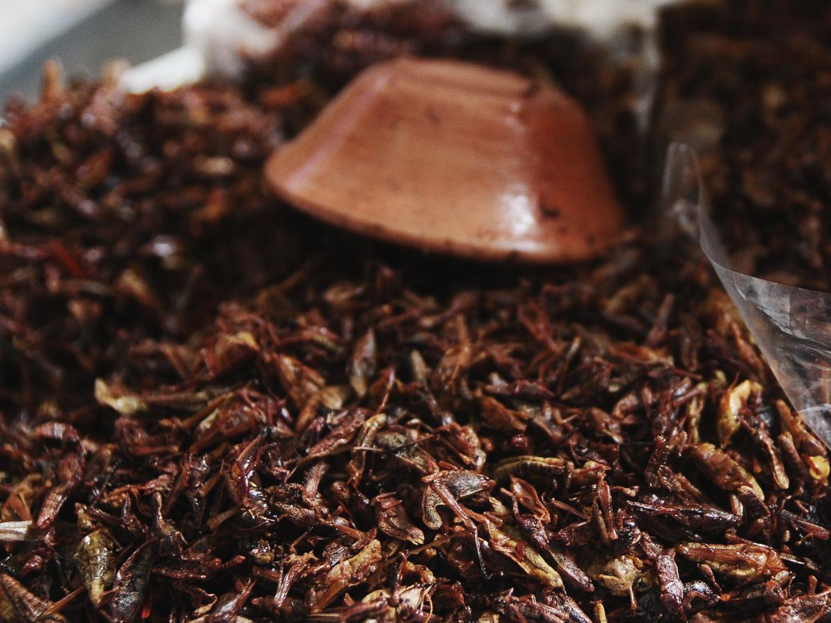 Crickets - Photo: Flickr / caseya
